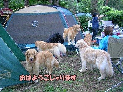 SANY7057_20100722103158.jpg