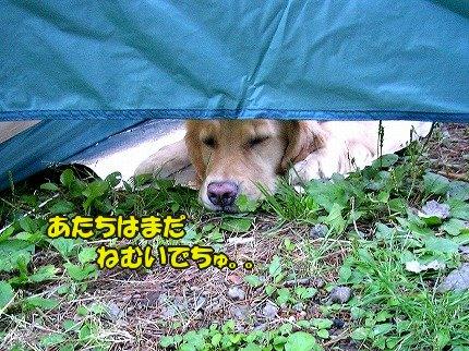 SANY7058_20100722103157.jpg
