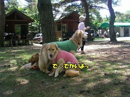 SANY7109_20100723110953.jpg