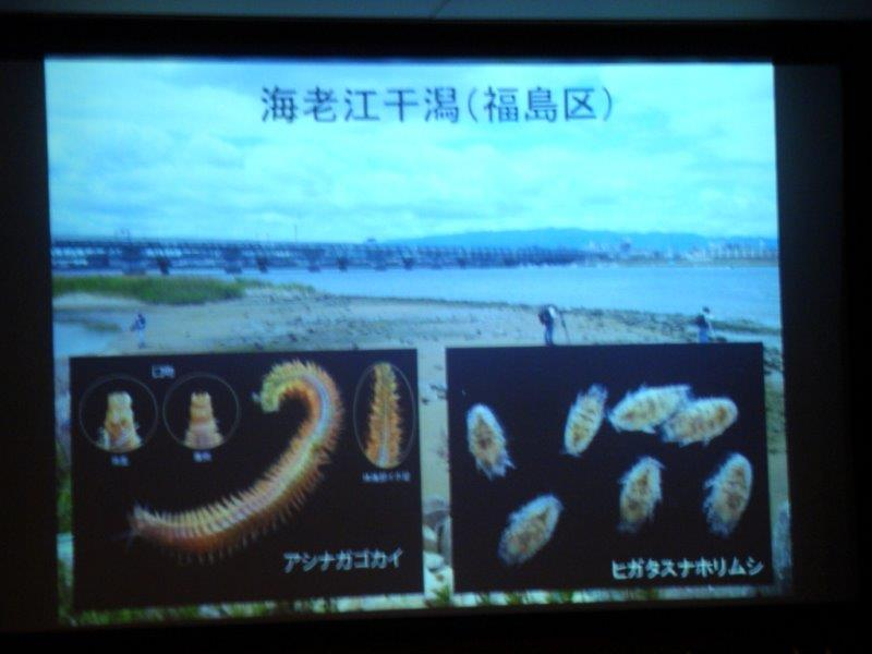 DSC05818海老江干潟