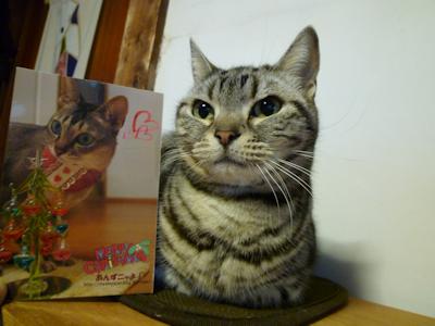 あんずミャミャさんからクリスマスカード♪