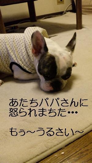 11_convert_20100731124721.jpg
