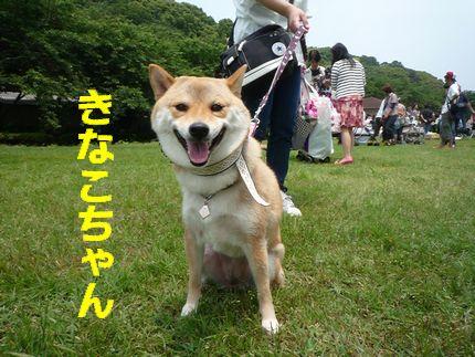 20110605恋の浦 きなこちゃん