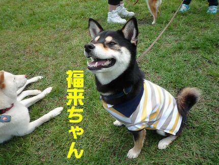 20110605恋の浦 福来ちゃん