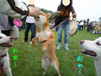 20110605恋の浦 リ大あ