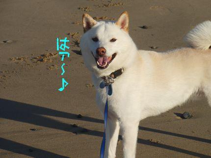 元気ですよー!! 11月の海ははァ~♪