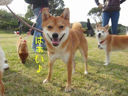 20111127@恋の浦 大ちゃん