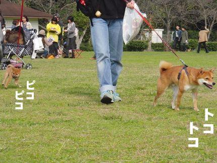 20111127@恋の浦 ききき、きたーーー!!!