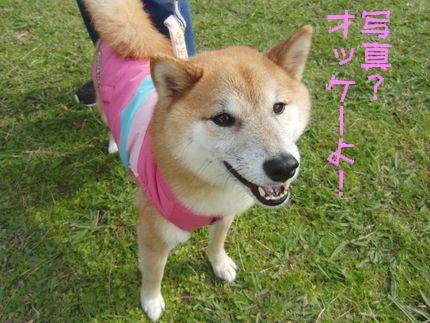 20111127@恋の浦 はなちゃん