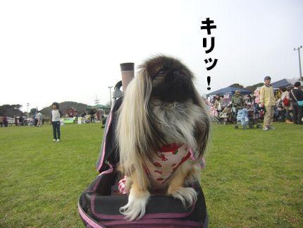 20111127@恋の浦 キリッとあんずちゃん
