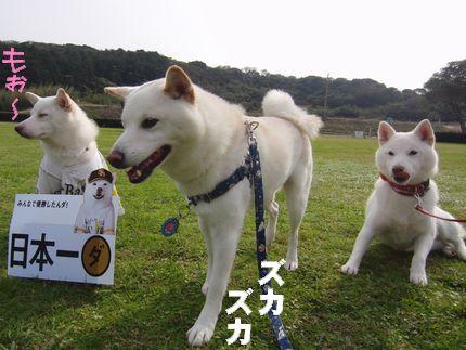 20111127@恋の浦 3白柴その2