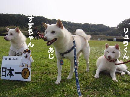 20111127@恋の浦 3白柴
