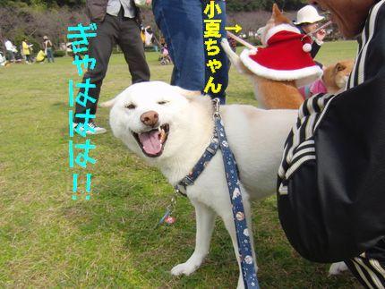 20111127@恋の浦 ぎゃはあじ&くれくれ小夏ちゃん