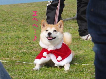 20111127@恋の浦 おやつハンター?