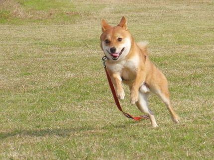 20111127@kぬr 飛んでる大ちゃん1