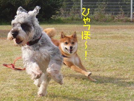 20111127@kぬr ひゃっほう大ちゃん1