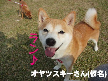 20111127@kぬr とってもキュートな小夏ちゃん