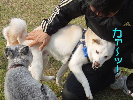 20111127@kぬr ハッスルあじ