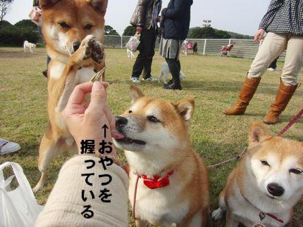 20111127@こいのうら まめちゃん、分かってらっしゃる!
