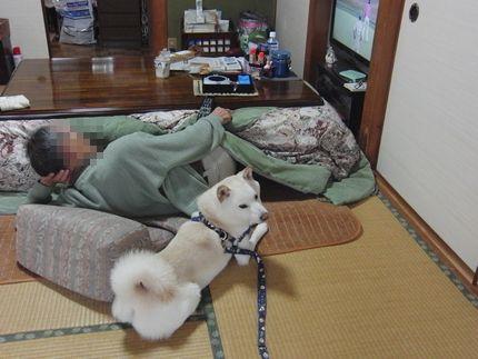 20111127@こいのうら お休みあじ1