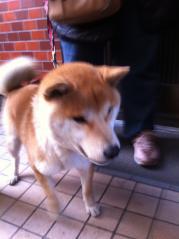 009_20120123091812s迷子犬
