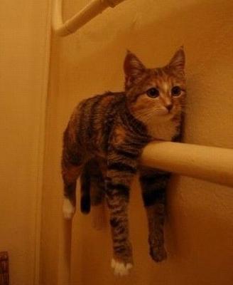 見つめるcats eyeGAGA