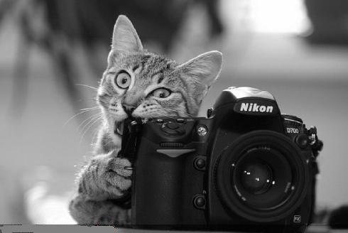 カメラ噛んだる