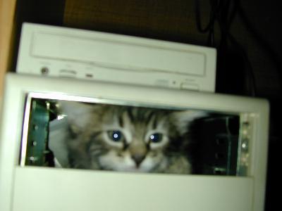 みつめる猫の眼