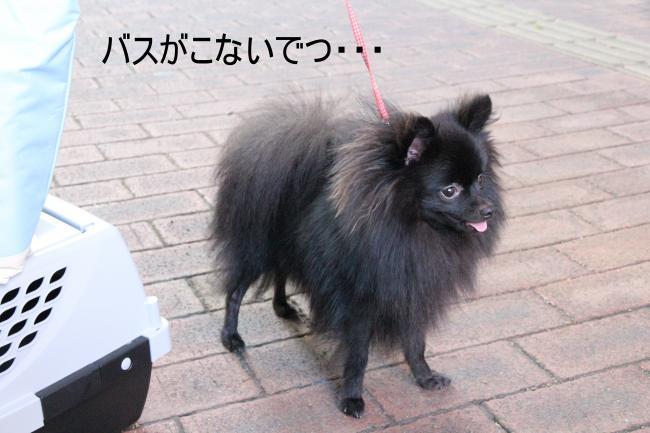 dog1+010_convert_20110919004213.jpg
