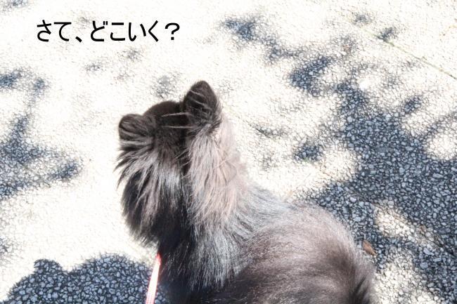 dog1+016_convert_20110919004458.jpg