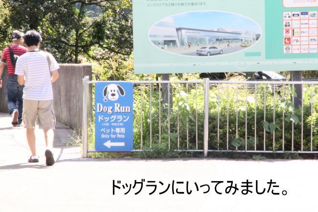 dog1+018_convert_20110919004601.jpg