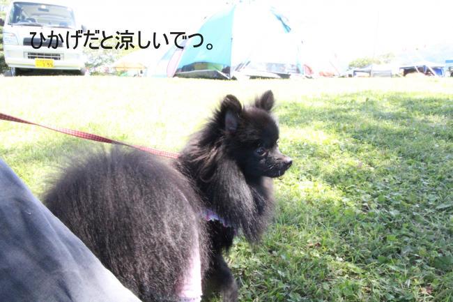 dog1+022_convert_20110920215817.jpg