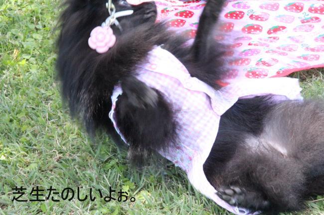 dog1+029_convert_20110920215857.jpg