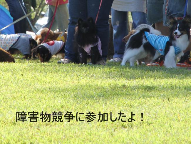 dog1+032_convert_20110920215918.jpg