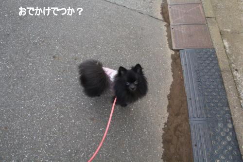 sanpo+017_convert_20110904230709.jpg