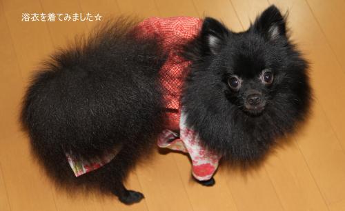 yukata+02_convert_20110812234952.jpg
