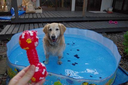 プールです2