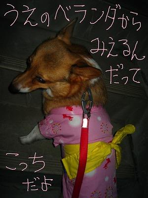 IMG_5206-s.jpg