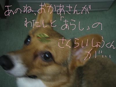IMG_5227-s.jpg