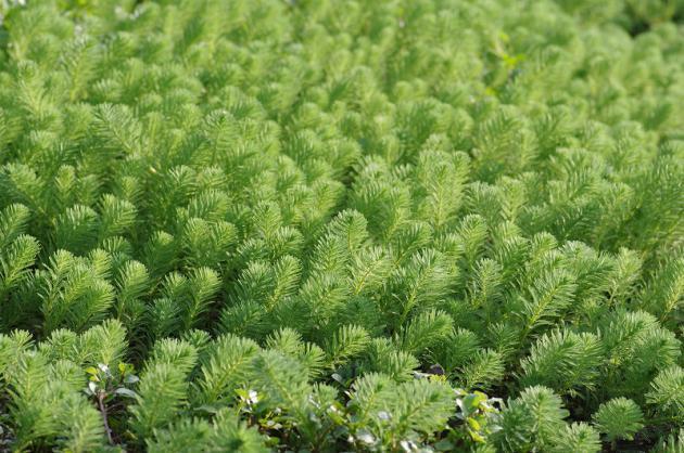 s1-水辺の草
