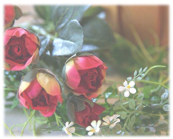 ミニアカバラと白い花