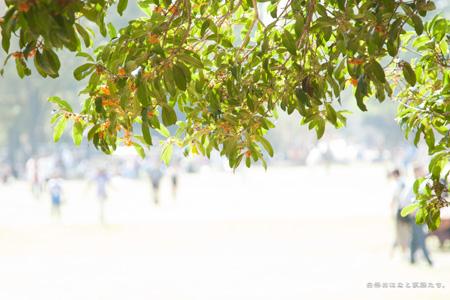 20111010-_MG_4494.jpg