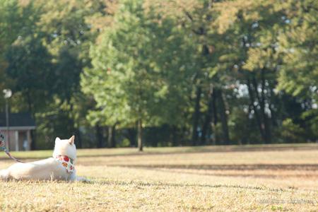 20111112-_MG_5590.jpg