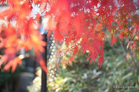 20111205-_MG_0418.jpg