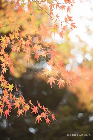 20111206-_MG_0606.jpg