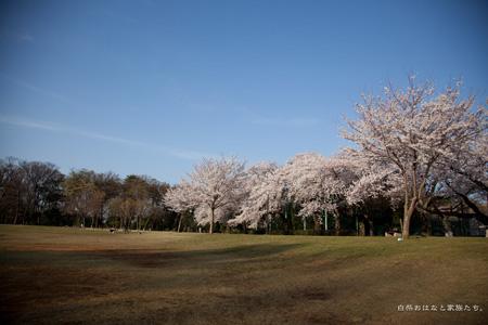 20120410-_MG_7782.jpg
