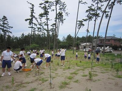 学校林除草 3