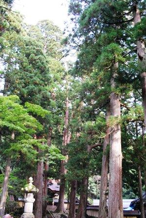 杉の森 永平寺