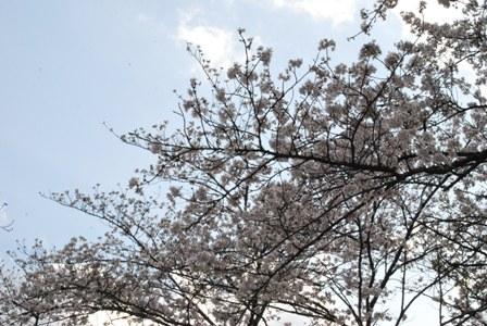 横浜 三ツ池公園