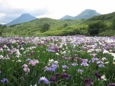 神楽女湖しょうぶ園